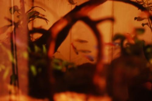 night_2014-05-01_2